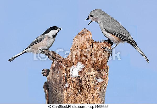 Dos pájaros en un muñón - csp1468655