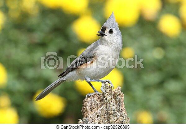 Pájaro en un tocón - csp32326893