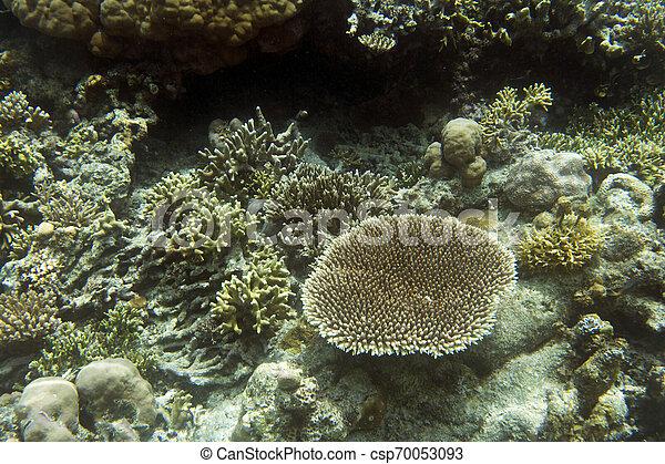 Vista de coral en las islas Togian - csp70053093