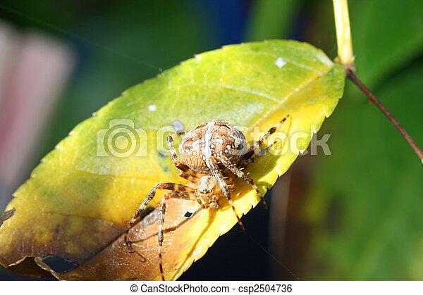 toile, araignés - csp2504736