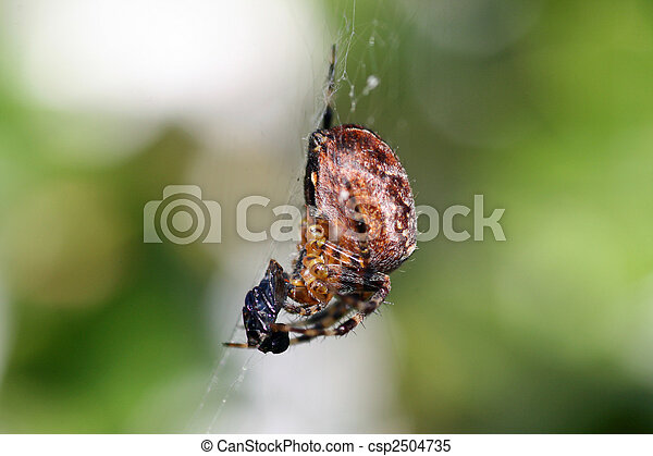 toile, araignés - csp2504735