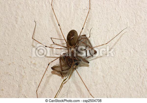 toile, araignés - csp2504708