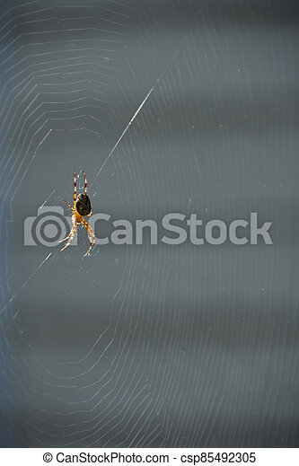 toile, patiemment, attente, araignés, centre - csp85492305