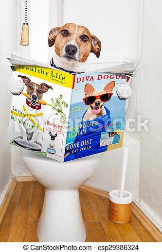 toilette hund sitz toilette verdauung verstopfung stockfoto bilder und foto clipart. Black Bedroom Furniture Sets. Home Design Ideas