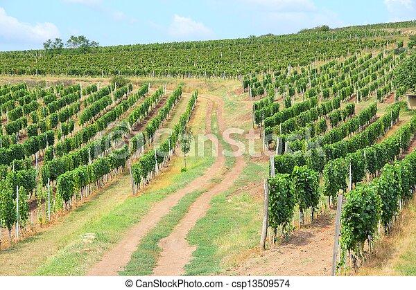 Tokaj wine region - csp13509574