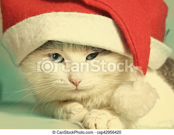 bbf83dfac tom cat close up portrait in christmas hat