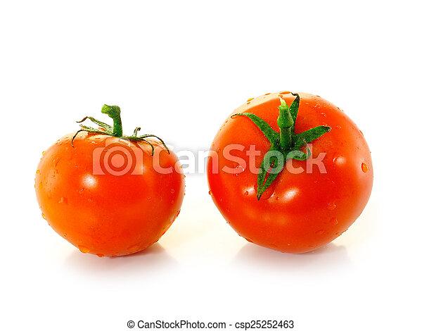 tomaat - csp25252463
