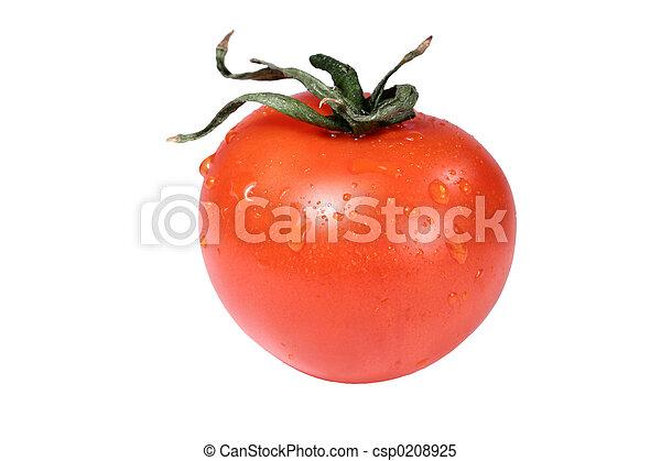tomate - csp0208925