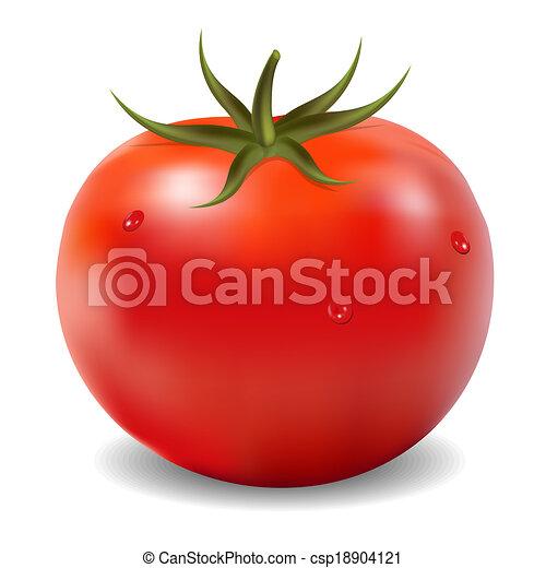 tomate - csp18904121