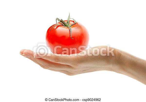 Mano femenina con tomate - csp9024962