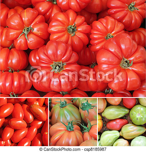 tomato collage - csp8185987