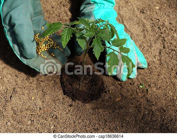 Tomato fertilizer - csp18636614