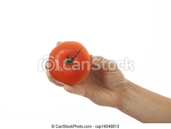 tomato in hand, isolated on white background - csp16046813