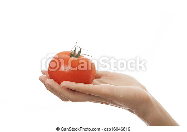 tomato in hand, isolated on white background - csp16046819
