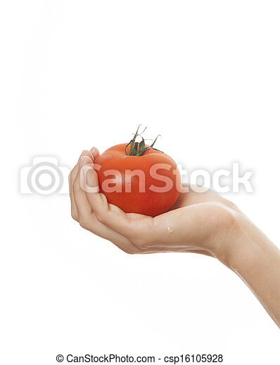 tomato in hand, isolated on white background - csp16105928