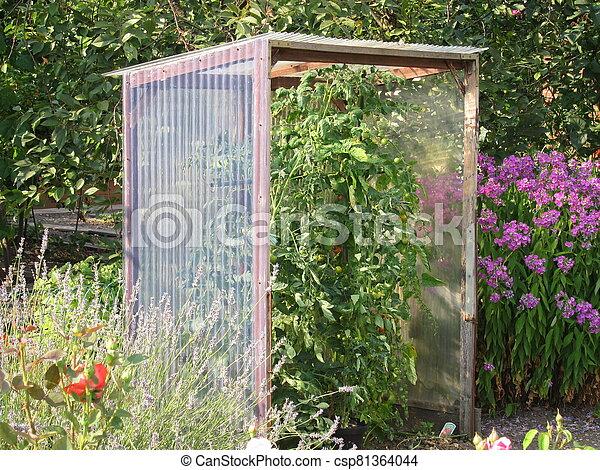 Tomato shelter in a garden - csp81364044