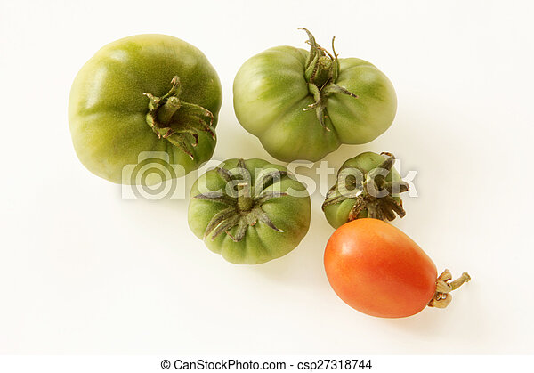Tomato - csp27318744