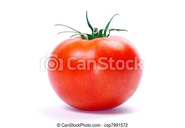 tomato  - csp7991572