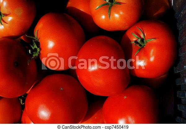 tomato - csp7450419