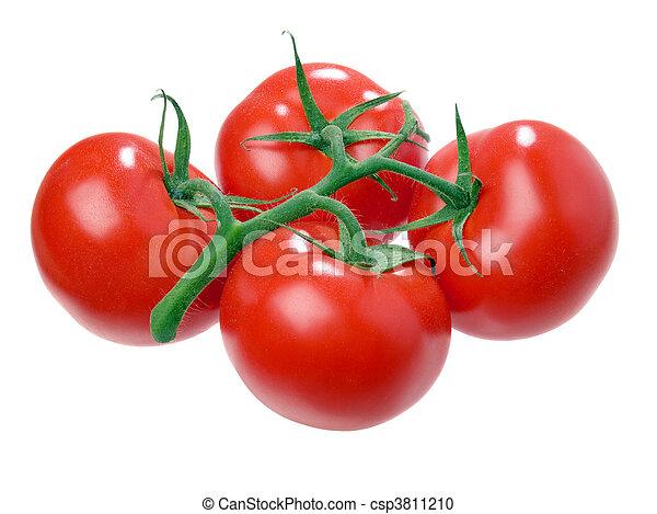 Tomato. - csp3811210