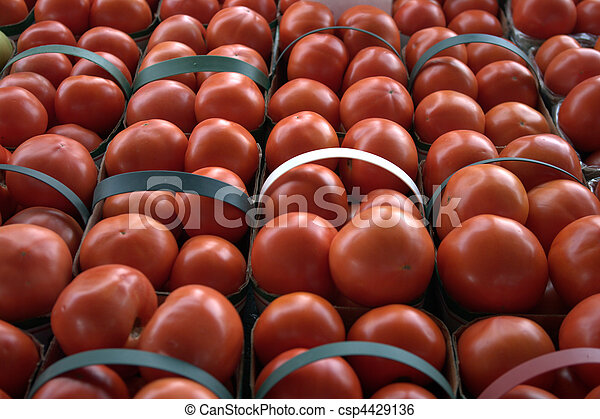 Tomatoes in Rows - csp4429136