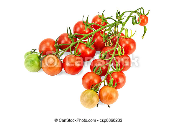 Tomatoes on a branch - csp8868233