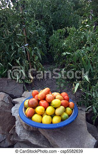 tomatoes - csp5582639