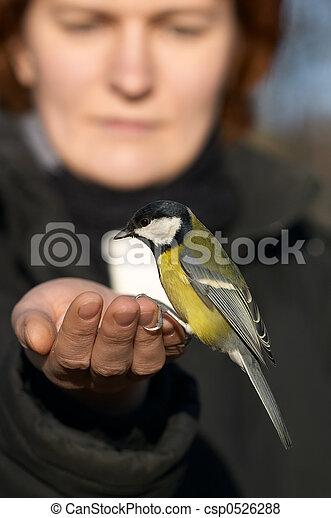 Tomtit bird sitting on the girl\\\'s hand - csp0526288