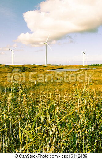 toned long grass and bogland with wind turbines - csp16112489