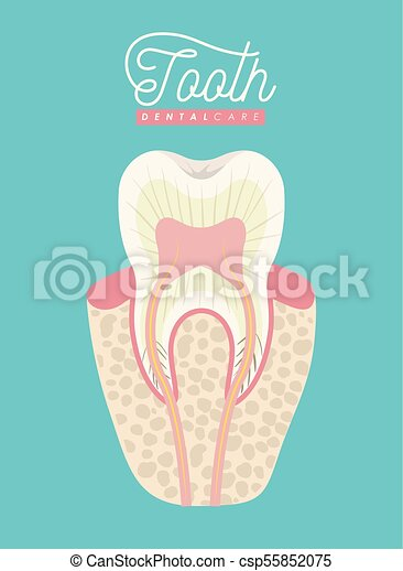 Tooth anatomy dental care on color poster vector illustration.