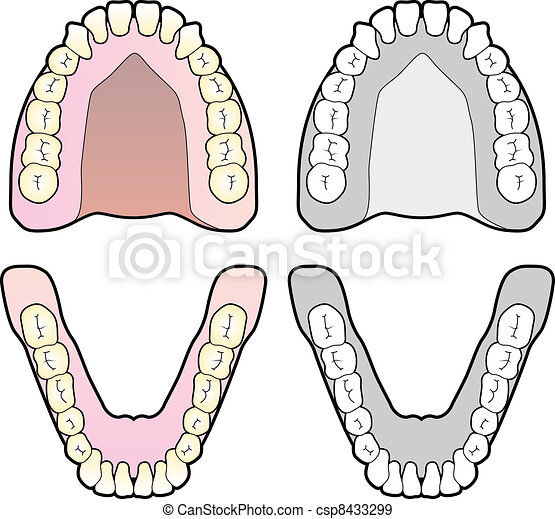 Tooth Chart - csp8433299