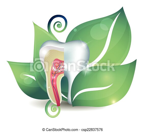Tooth cross section and leaf. Bright abstract treatment concept - csp22837576