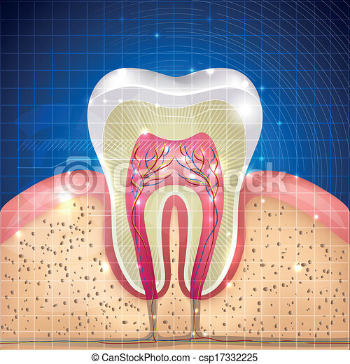 tooth cross section  - csp17332225