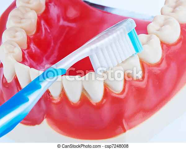 Tooth model with a toothbrush when brushing teeth - csp7248008