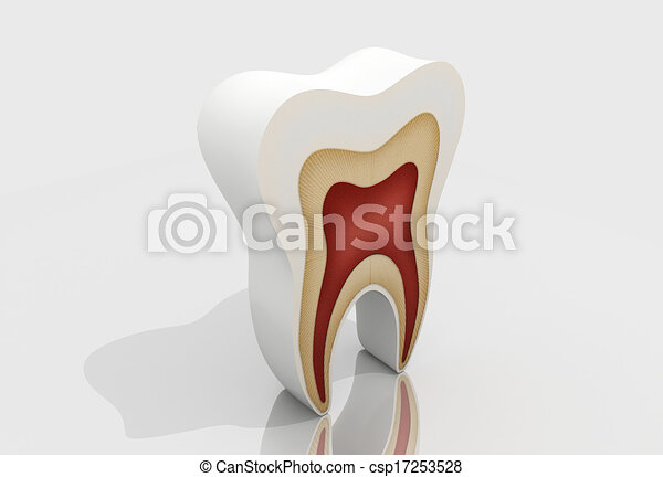 tooth structure - csp17253528