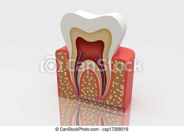 tooth structure - csp17268019