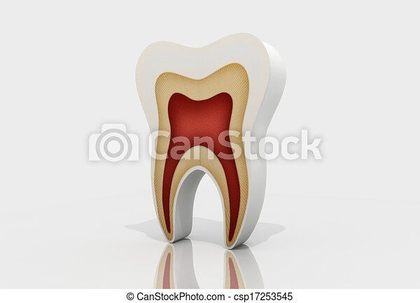 tooth structure - csp17253545