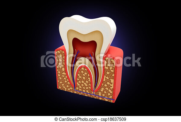 tooth structure - csp18637509