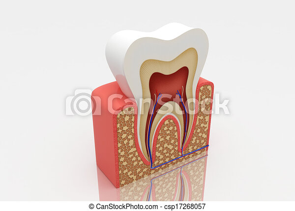 tooth structure - csp17268057