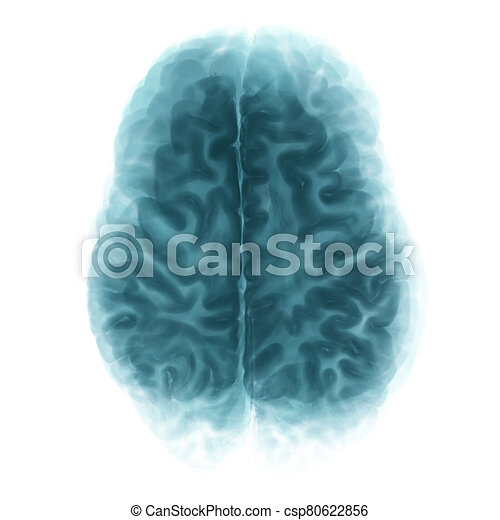 Top View Brain Isolated On White Background - csp80622856