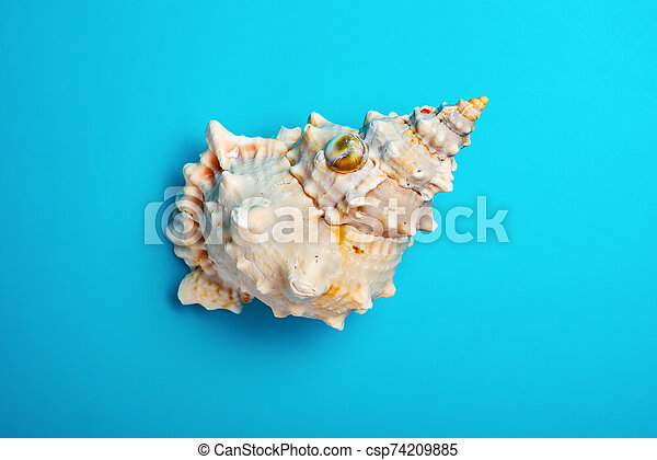 top view conch shell on a blue background - csp74209885