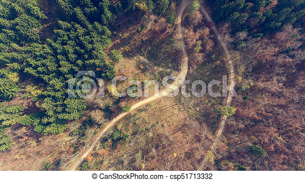 Top view of a road through forest. - csp51713332