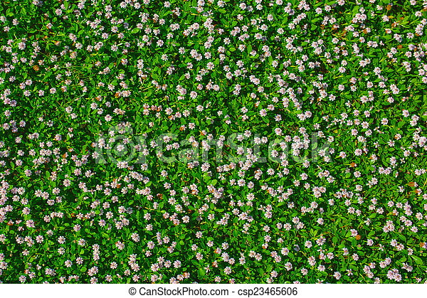 Top view of green grass with small white flowers background texture top view of green grass with small white flowers background texture csp23465606 mightylinksfo