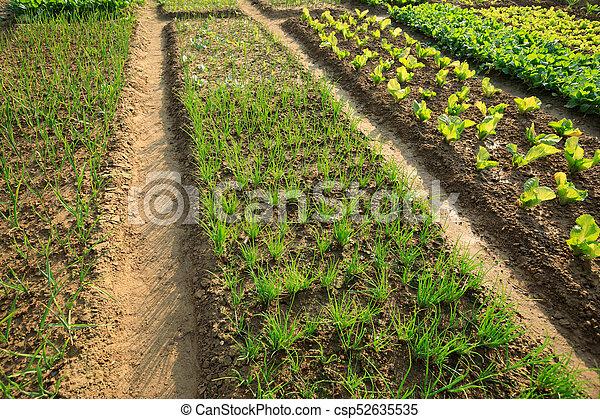Top View Of Green Vegetable Garden