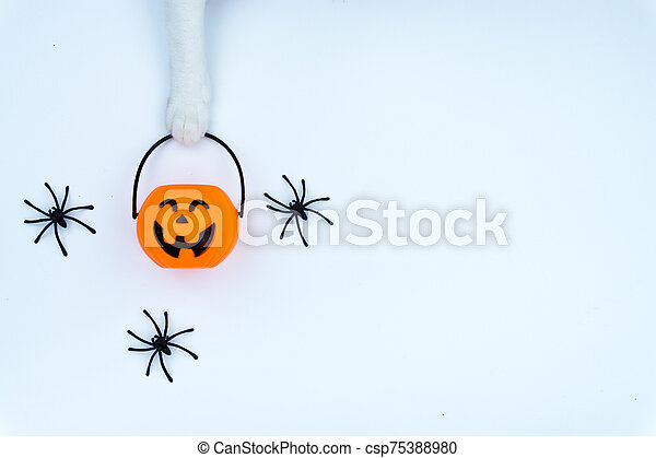 Top view of Halloween decoration, A hand of cat holding jack o lantern and spider on white background with copy space for text. halloween concept. - csp75388980