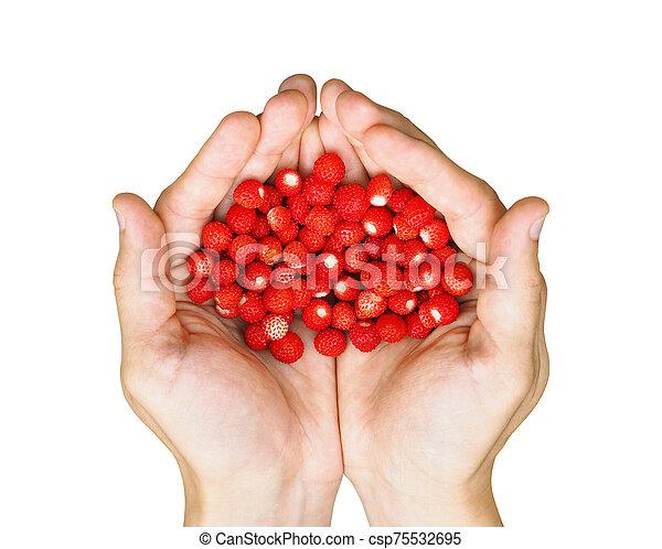 Top view of hands holding wild strawberries - csp75532695