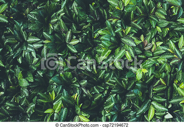 Top view of leaf small plant in garden - csp72194672
