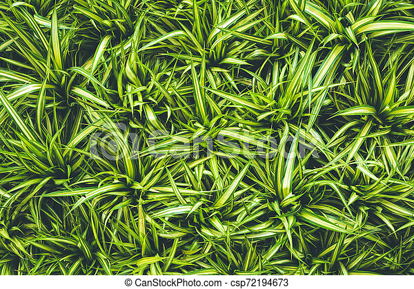 Top view of leaf small plant in garden - csp72194673