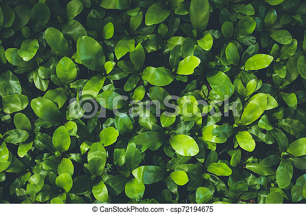 Top view of leaf small plant in garden - csp72194675