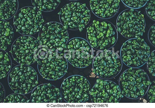Top view of leaf small plant in garden - csp72194676